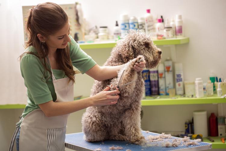 Animal care services occupations n.e.c.