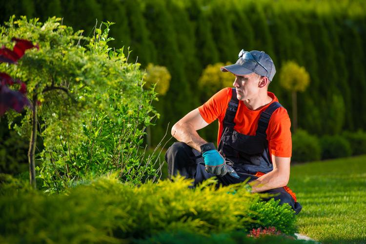 Horticultural trades | Pay, employment, hours & equality data
